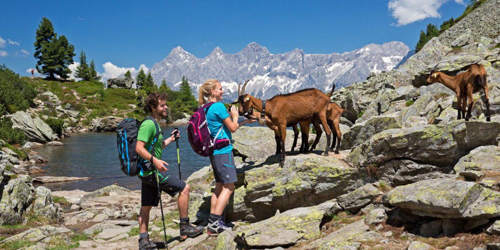 Wandern-Bergsteigen Schladming Dachstein